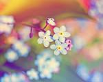 rainbow flowers.