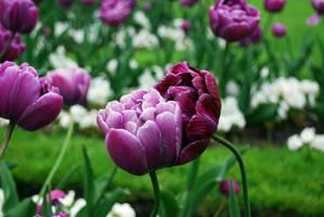 Flowers' LOVE by sunlookout
