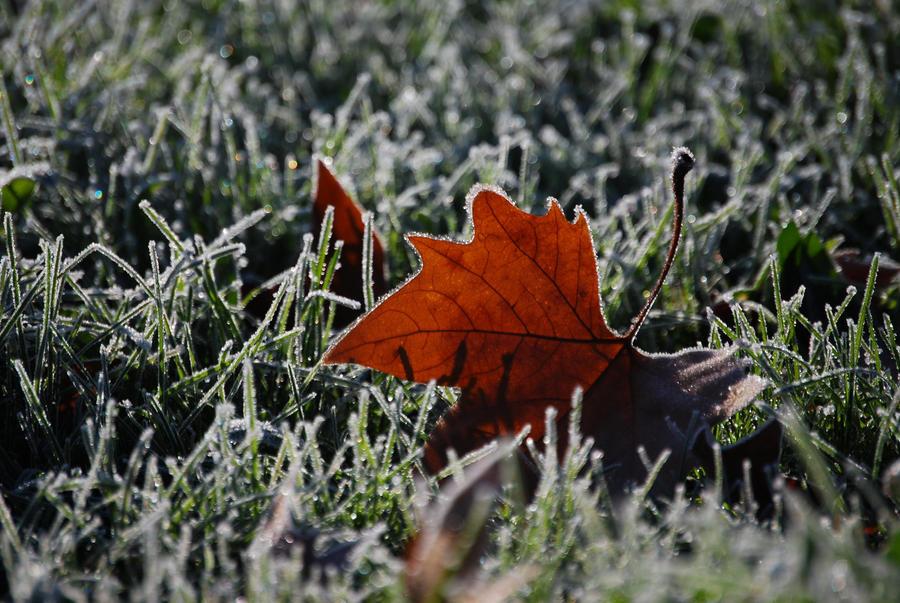 Autumn Winter by sunlookout