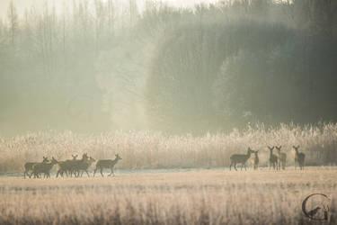 Cool morning by MGawronski