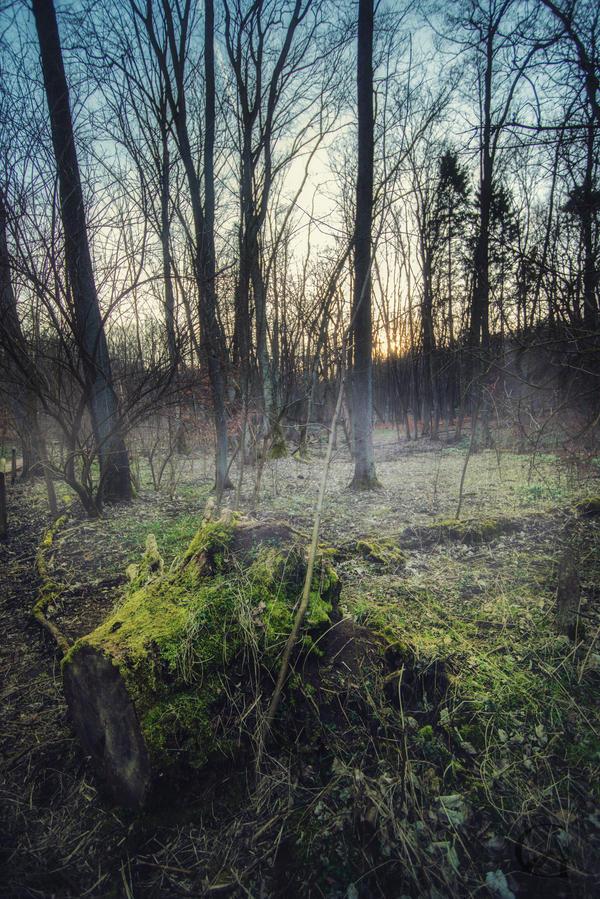 Misty Forest by MGawronski
