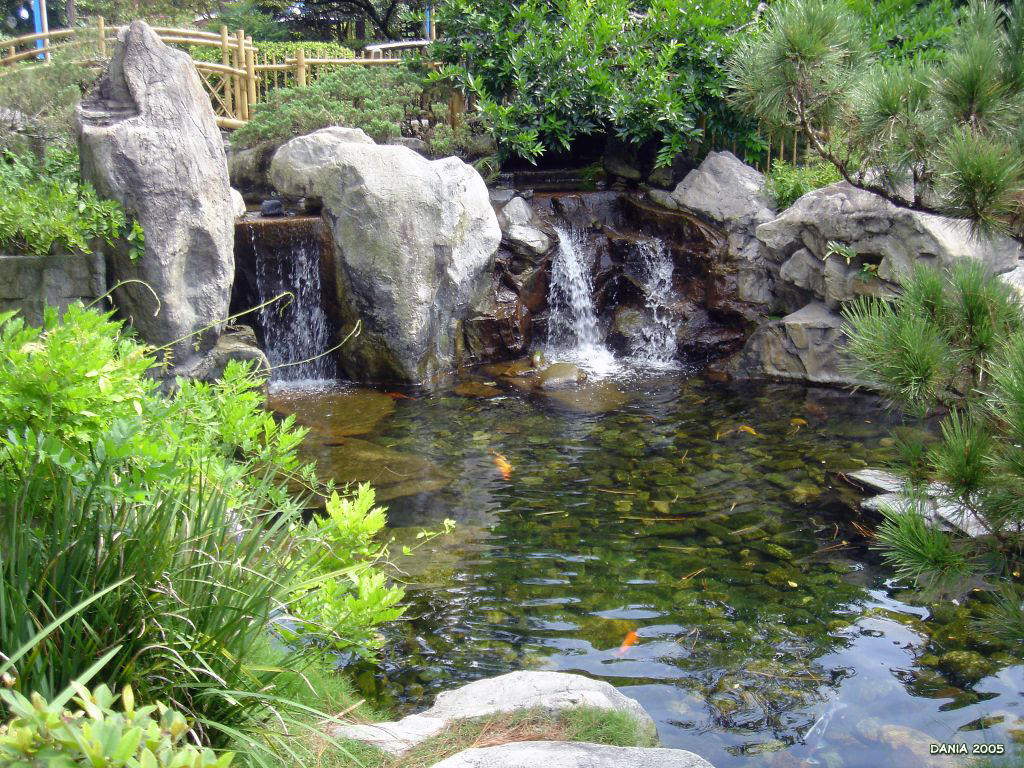 Koi pond wallpaper 1024 x 768 by d ko on deviantart Kio ponds