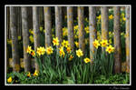 Spring flowers15