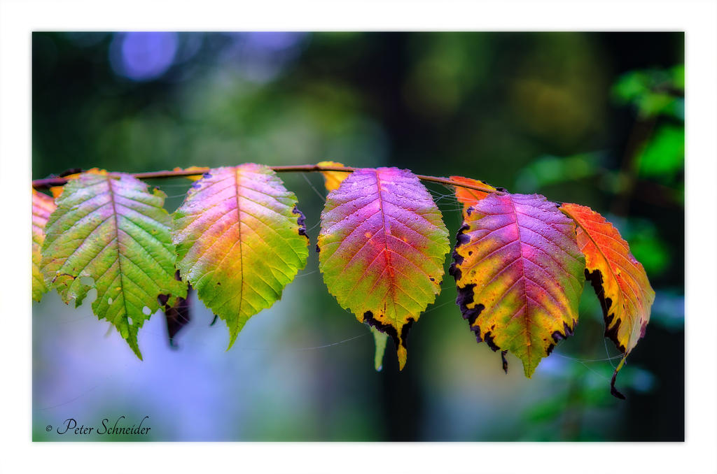 Autumn palette. by Phototubby