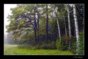 Forest edge. by Phototubby