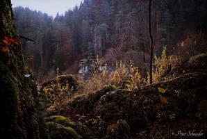 Dusk forest by Phototubby