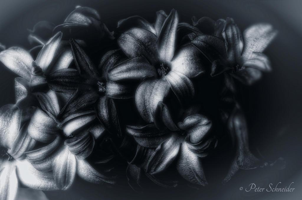 Voluptuous poison. by Phototubby