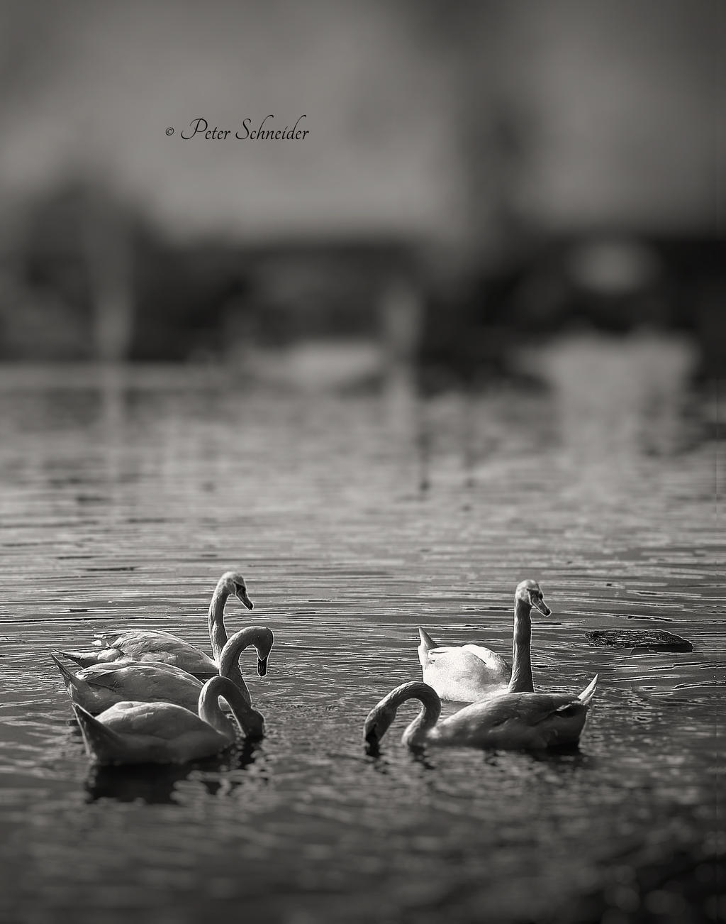Beside the river. by Phototubby