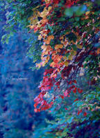 Fall a play of colours. by Phototubby