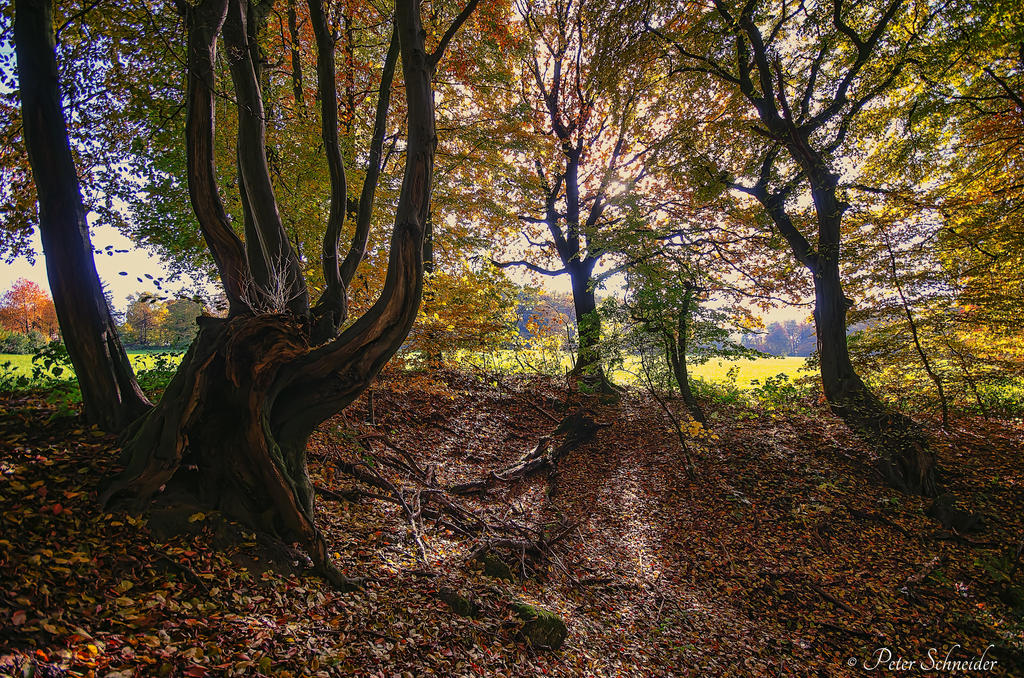 Autumnforest. by Phototubby