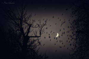 Night elegie. by Phototubby