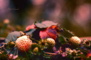 Fall berries. by Phototubby