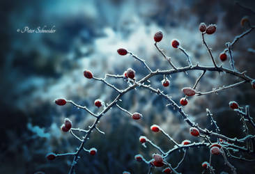 Winter mood. by Phototubby
