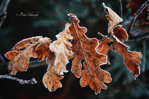 Frozen world. by Phototubby