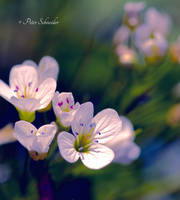 Meadow (Detail IV). by Phototubby