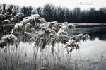 Winter on the lake.