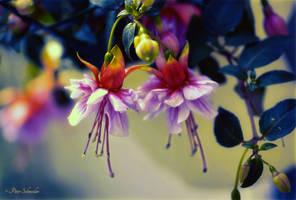 Balerinas. by Phototubby