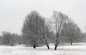 Through  a winter day V. by Phototubby