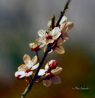 Spring branch. by Phototubby