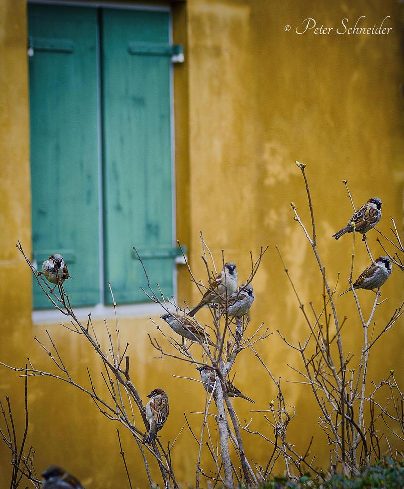 Jolly swarm. by Phototubby