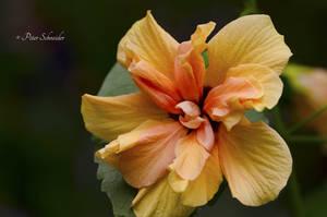 Hidden beauty V. by Phototubby