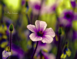 Colours,colours. by Phototubby