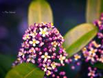 Spring in my garden II.