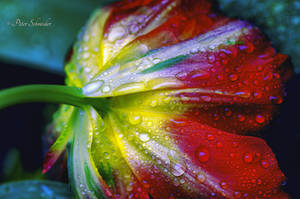 After the rain. by Phototubby