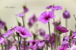 Pink-violet.