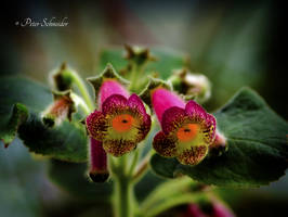 Beauty IV.(detail). by Phototubby