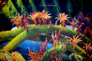 From the beautiful world of plants.(VI) by Phototubby