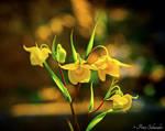 Yellow beauty.