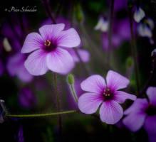 Beautys (V). by Phototubby
