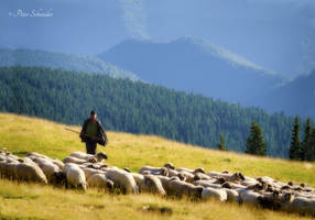 By the shepards in transylvanian mountains. by Phototubby