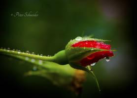 Rainy monday. by Phototubby