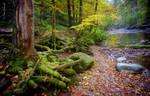 Autumnal riverside..