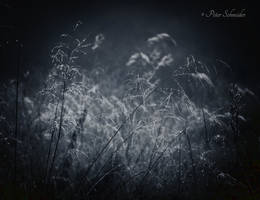 Early dew. by Phototubby