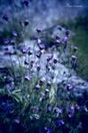 Tender violet.