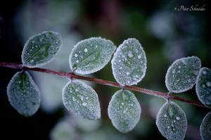 Frozen. by Phototubby