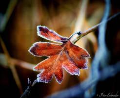 Frozen colour. by Phototubby