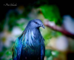 The pigeon and the rainbow. by Phototubby