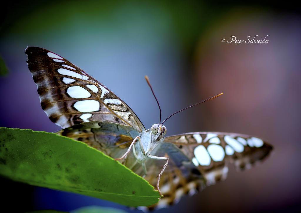 Heavy wings. by Phototubby