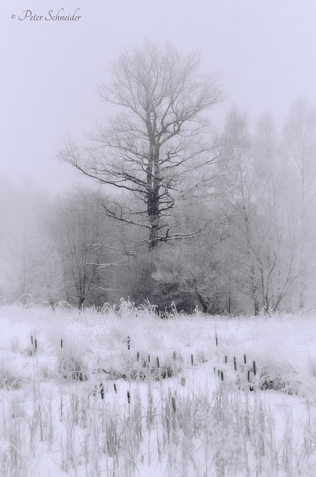 Endless white(III). by Phototubby