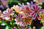 From the beautiful world of plants!(6462)