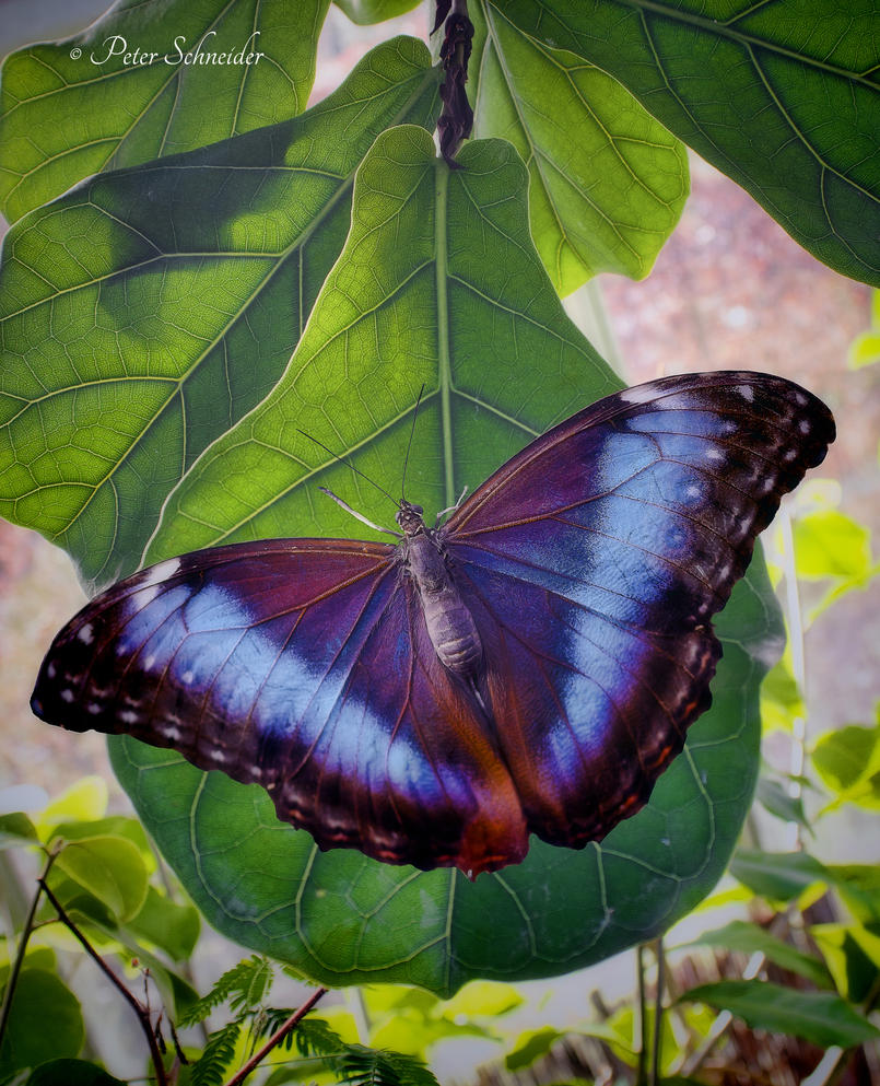 Colour wings(V). by Phototubby