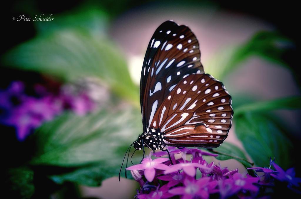Tender wings (X). by Phototubby