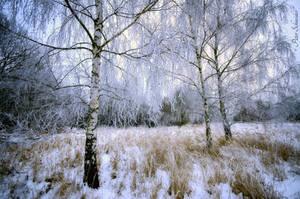 Frosty. by Phototubby
