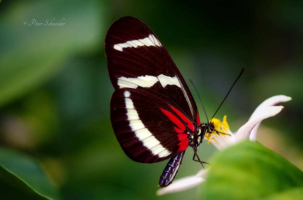 Tender wing(XI). by Phototubby