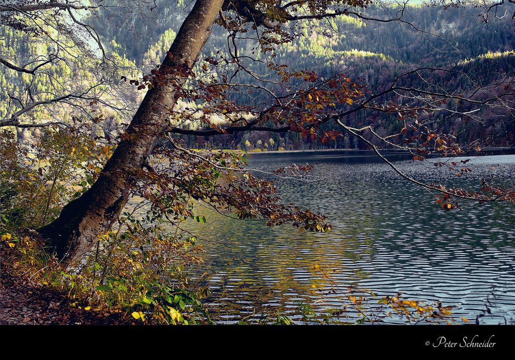 Trough the autumn ( V). by Phototubby
