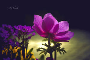 Spring bouquet(III). by Phototubby